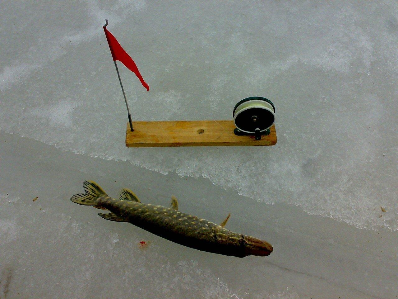Жерлицы на рыбалку своими руками фото 95